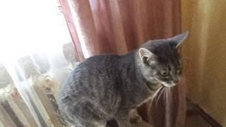 Внимание кошки понимают человеческую речь.