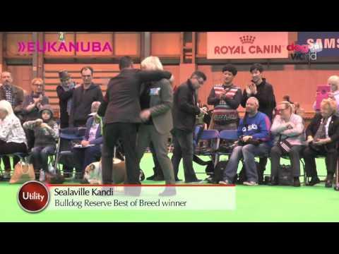 Crufts 2016 - Bulldog Best of Breed