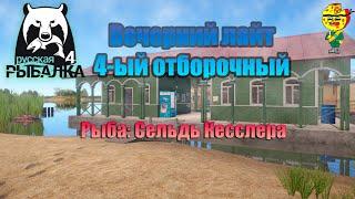 Вечерний лайт 4 ый отборочный Максималка Сельдь Кесслера Стрим русская рыбалка 4