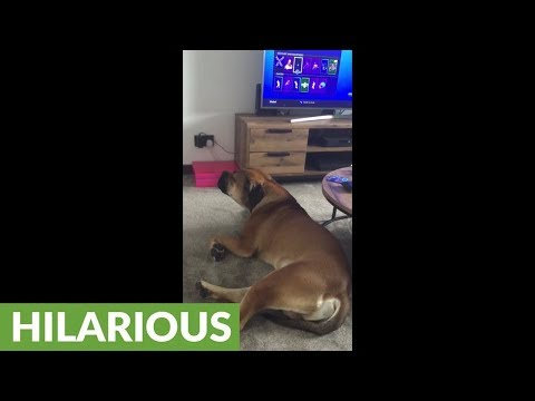 Ringing telephone sends dog into howling fit