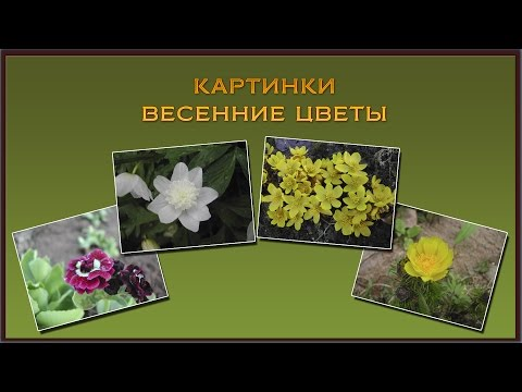 Картинки для детей весенние цветы