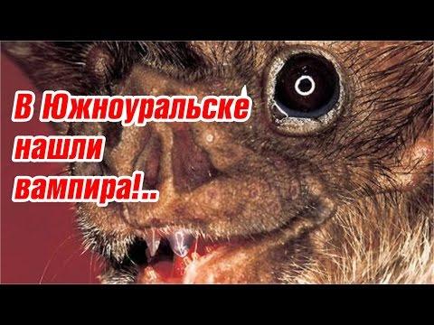 Нашли вампира в Южноуральске!..