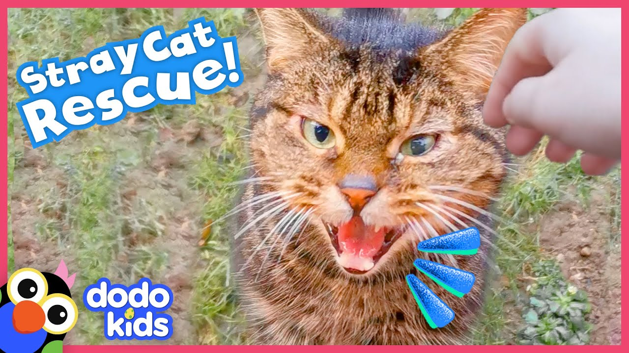 Rescuer Builds A Tiny House For Curious Stray Cat | Rescued! | Dodo Kids
