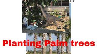 Universe Size Comparison Top Ten Palm trees you can plant