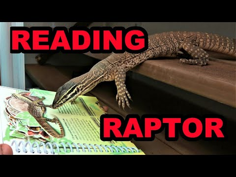 Olive Teaches Raptor to Read.