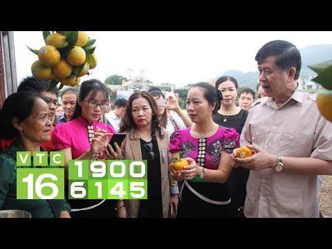 Sôi động Ngày Hội Cam Phù Yên - Sơn La I VTC16
