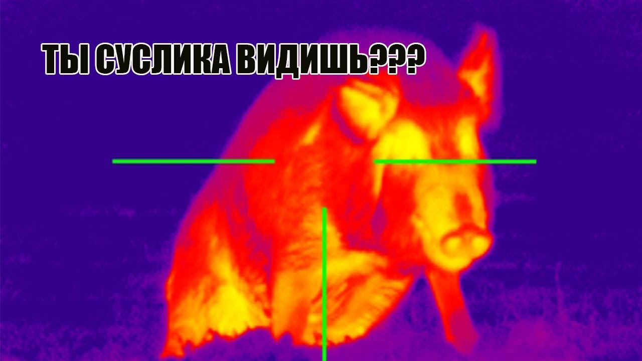 ТЕПЛОВИЗОР⚠️НА ОХОТЕ‼️ ЗАЧЕМ❓🚷видео с Pulsar ACCOLADE-2 XP50 LRF