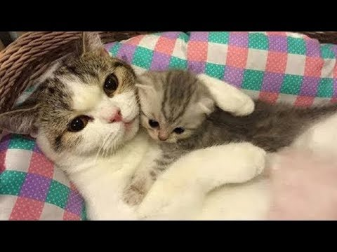 Cute is Not Enough - Best Funny Cats and Dogs Compilation #1