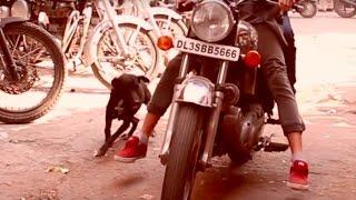 Ich wurde in Indien vom Hund gebissen! I Indien Vlog#11 - Delhi