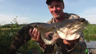 Сом на рассвете Рыбалка Беларуси на реке Свислочь Fishing in Belarus