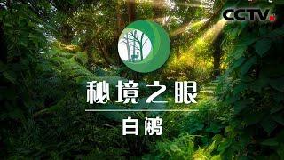 《秘境之眼》 白鹇 20210113| CCTV - YouTube