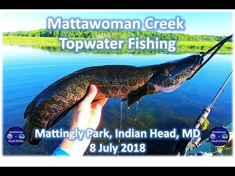 Mattawoman Creek Topwater Fishing, 8 July 2018