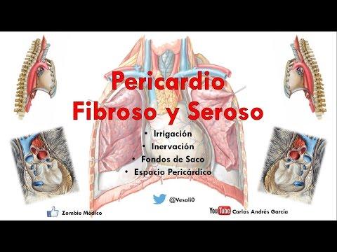 Pericardio by Prof. Alvaro Puelles