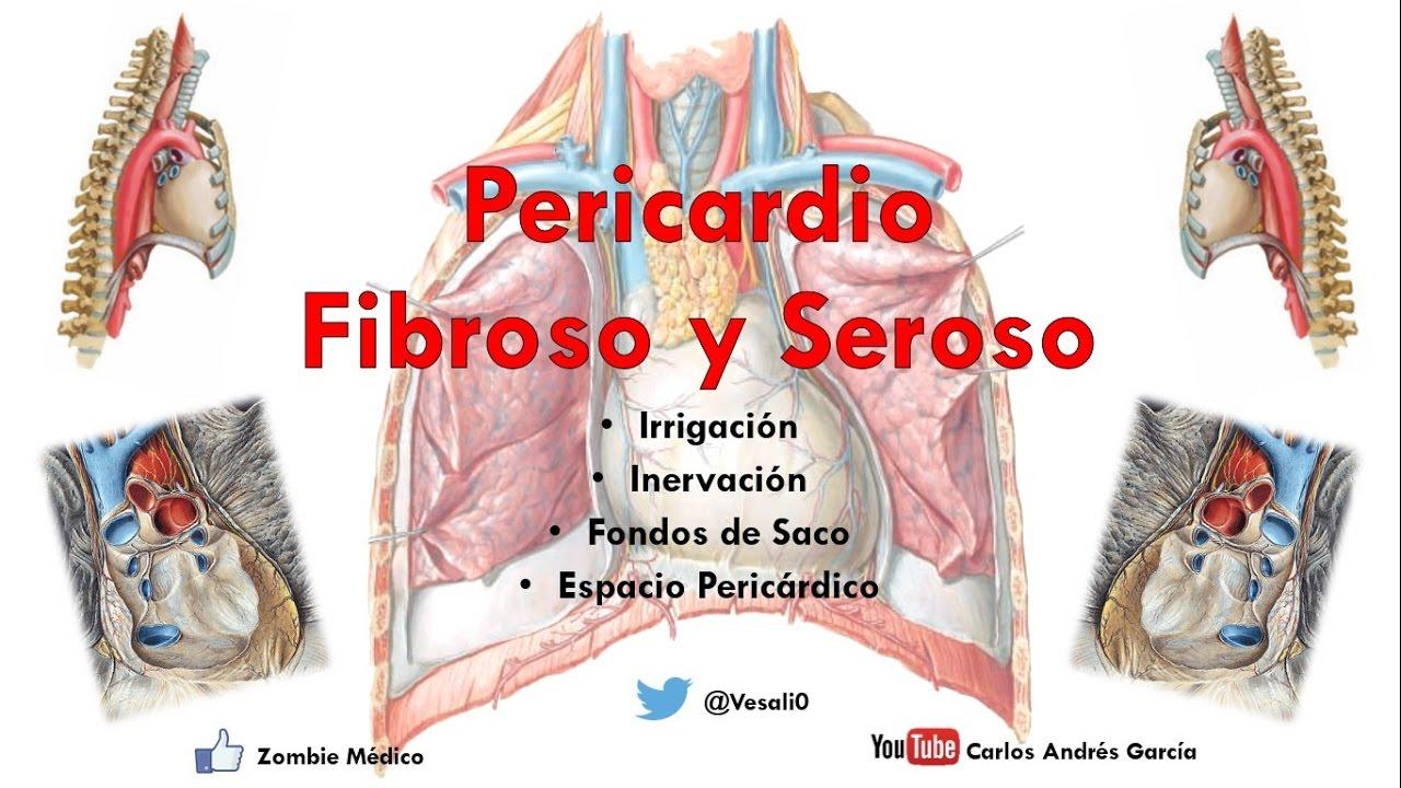 Anatomía - Pericardio Fibroso y Serorso (Relaciones, Irrigación ...