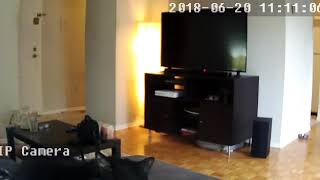 Cat discovers security camera