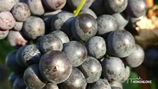 Von Fässern, Festen und Besen Das Weinparadies Hohenlohe