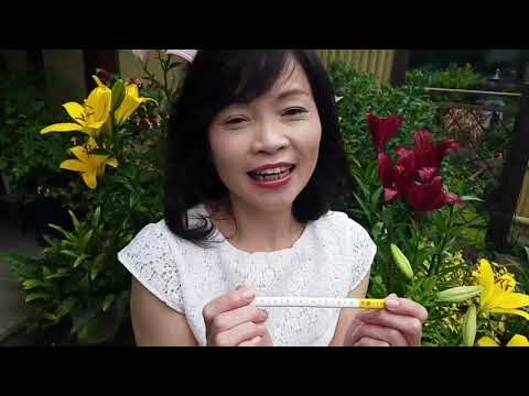 10/11 京都かきかた鉛筆のプロモーション動画を作りました!