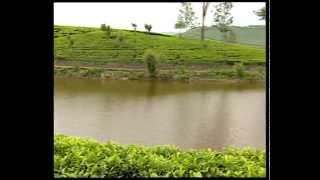 Sri Lanka Tea Board Video