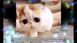 Котик Снуппи