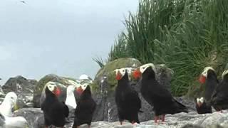 Птицы островов и побережий