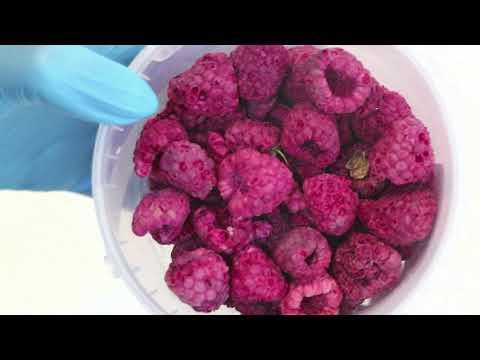 08142 Сублимированная Малина крупная целая ягода 50 гр