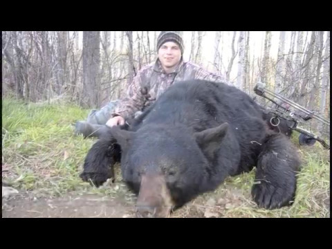 A Hunt For BIG Manitoba Bears!!!
