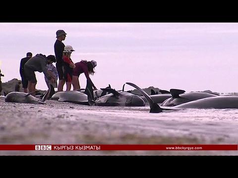 Би-Би-Си ТВ жаңылыктары (10.02.17)- BBC Kyrgyz