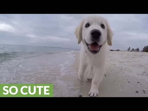 Grinning puppy's amazing day at the beach