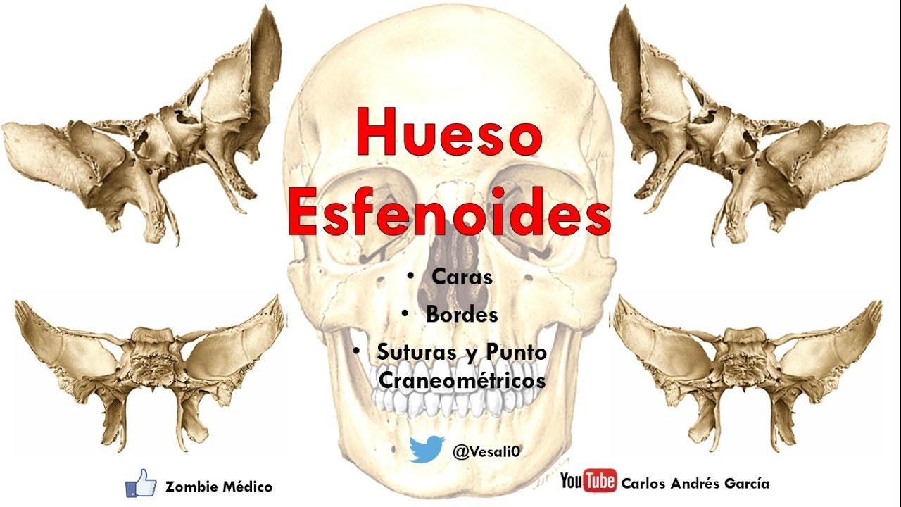 Anatomía - Hueso Esfenoides (Cuerpo, Alas Mayores y Menores ...