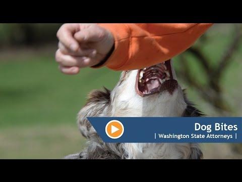 Dog Bites   Washington State   Dog Bite Attorney