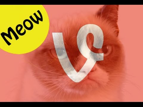 6 Best Cat Vine Compilation Of The Week