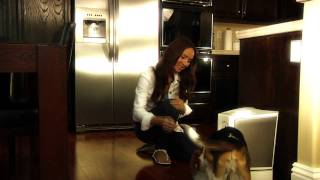 Pet Feedster - The World's Finest Automatic Pet Feeder