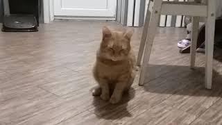Кот после анестезии.