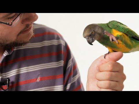 How to Teach Your Parrot to Talk | Parrot Training