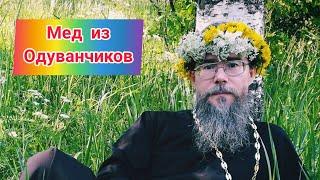 Мед из одуванчиков. Рецепты от священника РПЦ. Дары Природы!