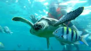 Playa Mia Beaches & Waterpark in Cozumel