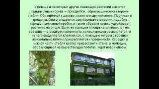 Видоизменение корней.AVI
