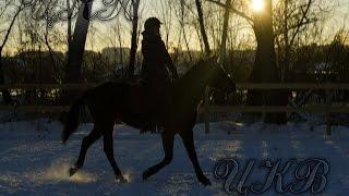 Вы думаете, конный спорт - легко?