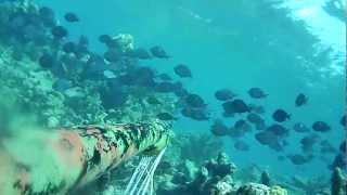 agguato allo squalo