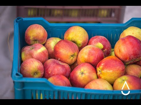 Интервью про яблоки: Куралай Карибаева. Часть 1