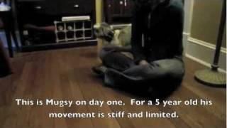 Mugsy the Puppy Mill Rescue: A Behavior Modification Case Study