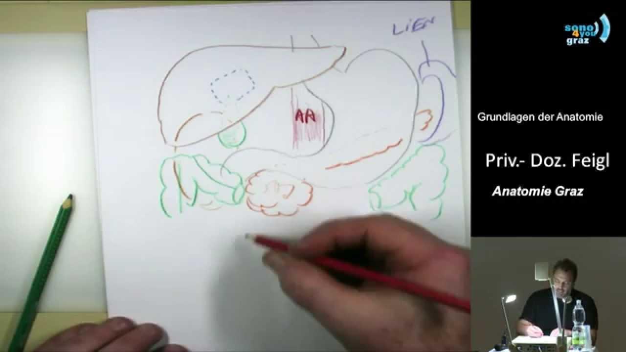 Anatomische Grundlagen I - Priv.-Doz. Dr. Georg Feigl - YouTube