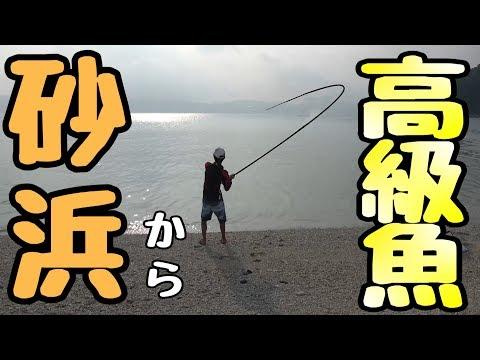 【奇跡】砂浜から高級魚が釣れた 座間味島 #2