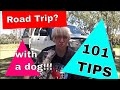 101 Tips for Taking a Dog on a Road Trip in Australia