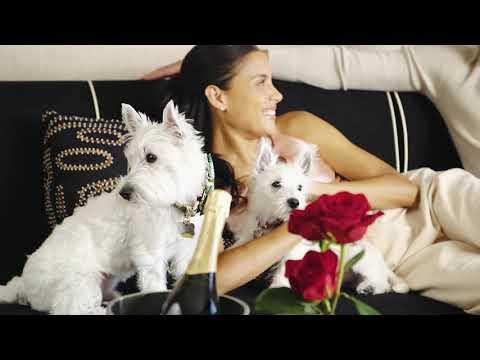 Encore At Wynn Las Vegas Introduces Dog-Friendly Resort Program...