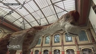 Динозавры - в полный рост