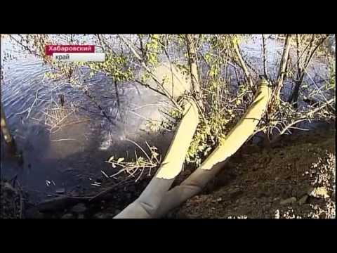 Мария Васильева(моя сестра) в Новостях 1 канал
