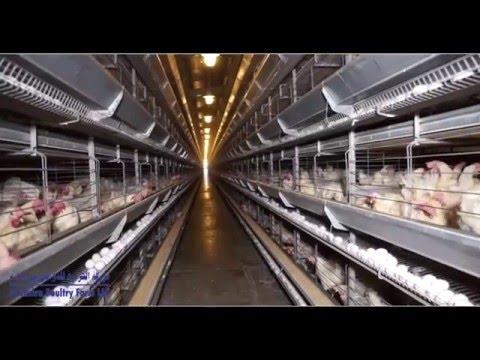 Al Jazira Poultry Farm LLC - Abu Dhabi, UAE