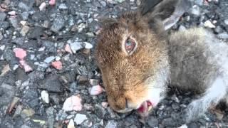 к чему емли збили зайца
