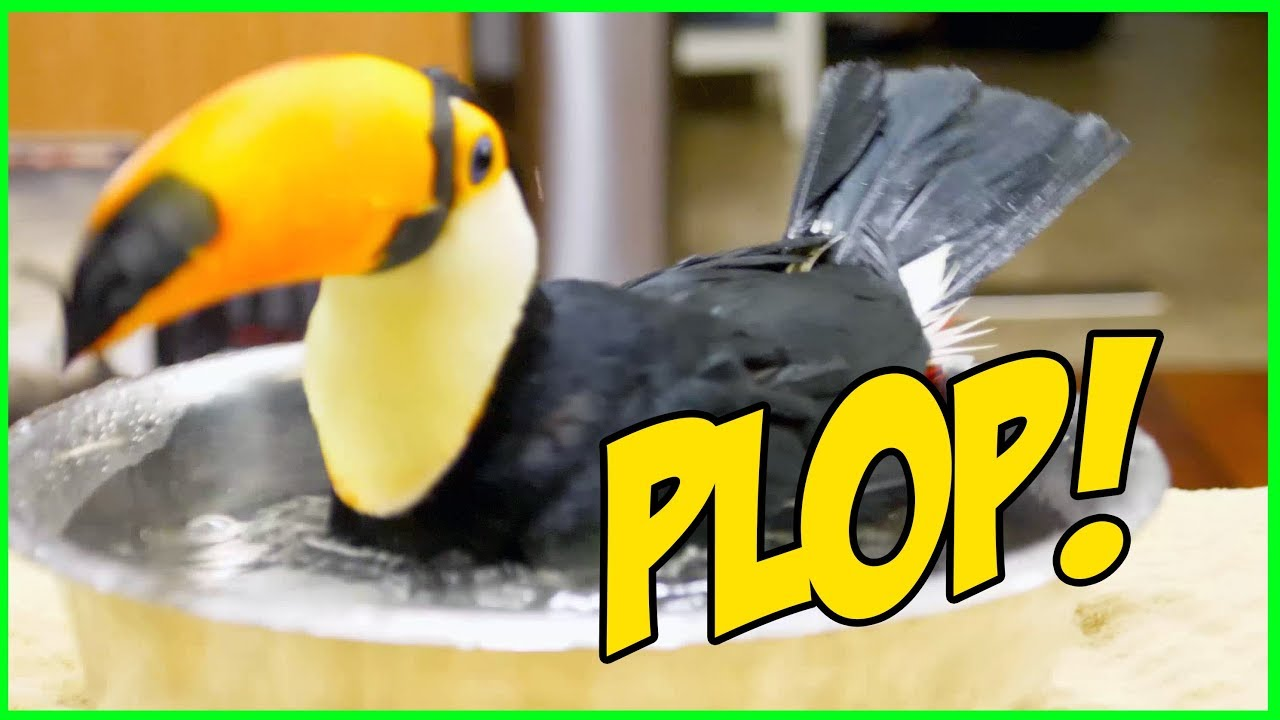 bathing-toucan-is-next-level-asmr-seriously-relaxing